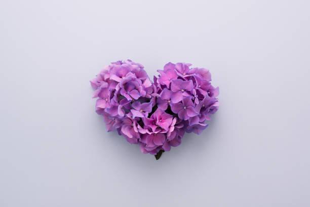 Liebe Herz Form aus violetten Blüten auf lila – Foto