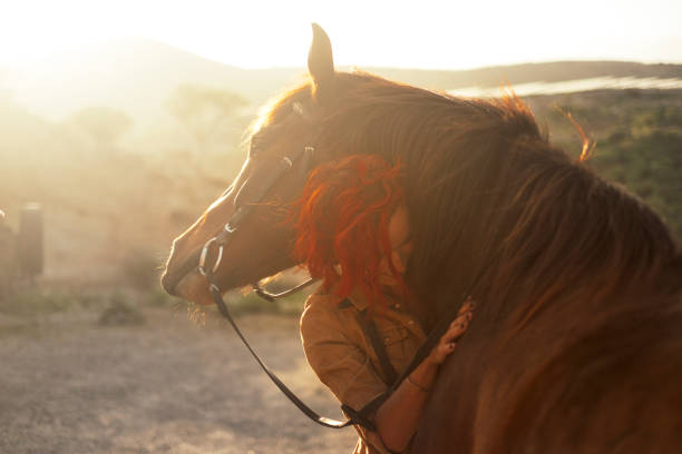 Love horse animal pet therapy red hair young pretty woman hug with affection her best friend - sunset sunlight in backlight - outdoor leisure activity and friendship concept stock photo