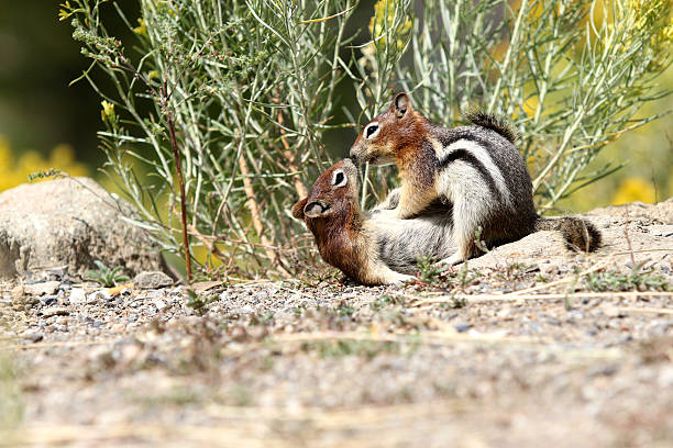 Royalty Free Animals Mating Pictures, Images and Stock ...