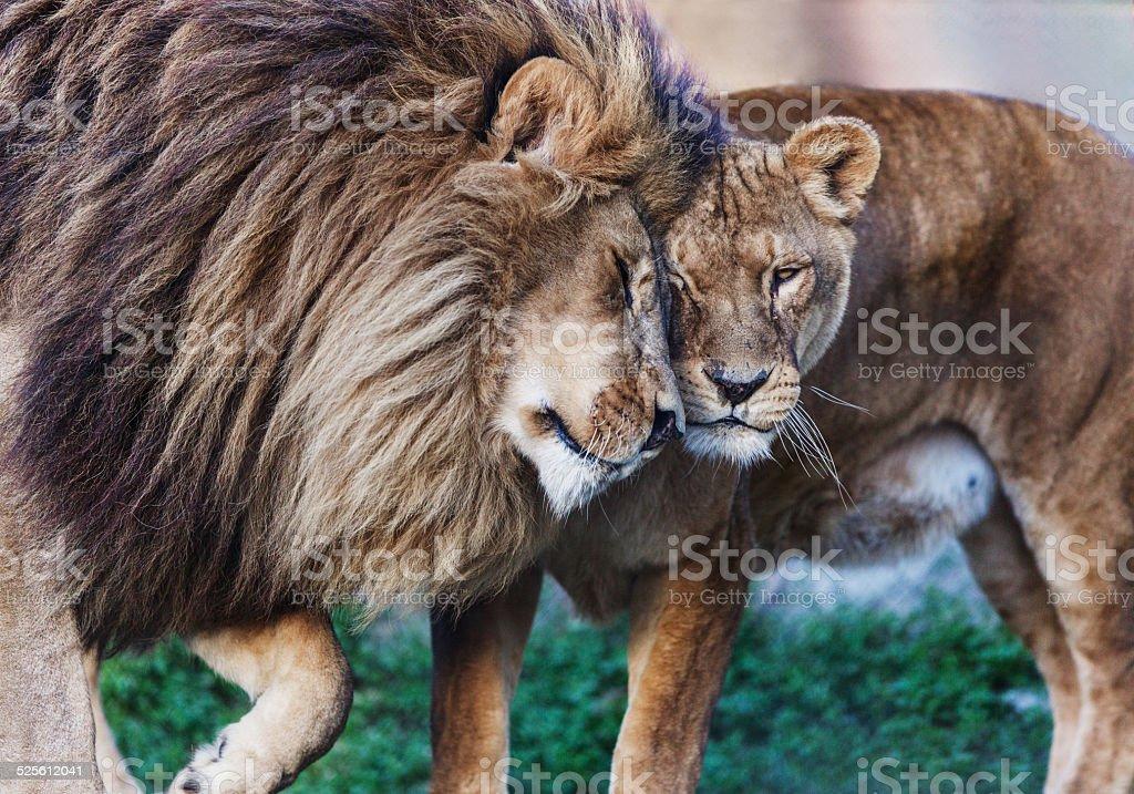 Love in wild. stock photo