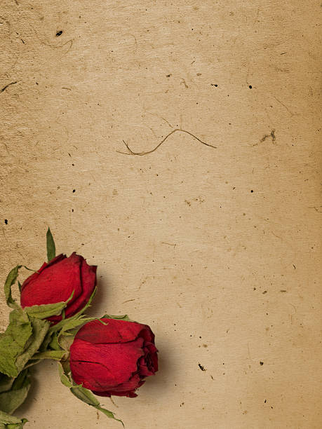 Top 60 Rose Love Letter Backgrounds Valentine Stock Photos