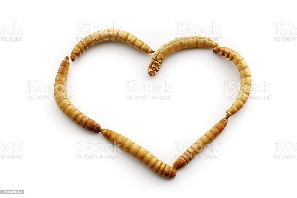 Love mealworms stock photo