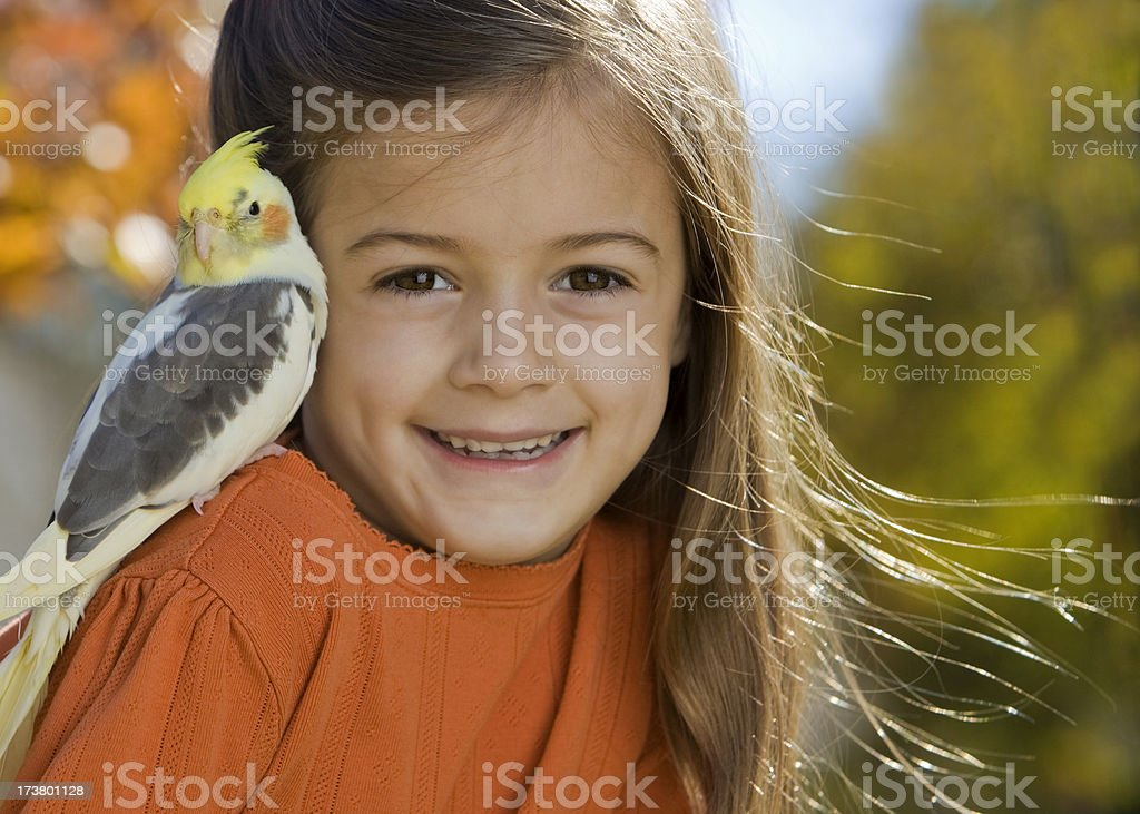 I Love My Cockatiel stock photo