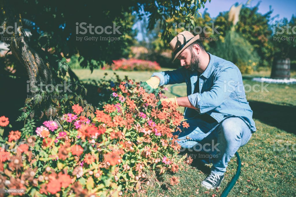 I Love My Zinnia Flowers stock photo