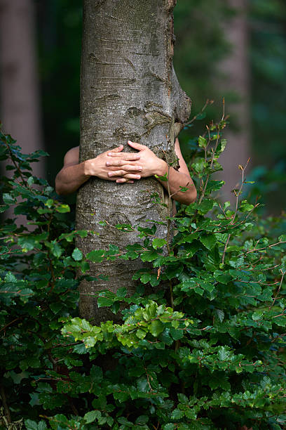 love nature man hands embracing tree,love nature and environment concept. tree hugging stock pictures, royalty-free photos & images