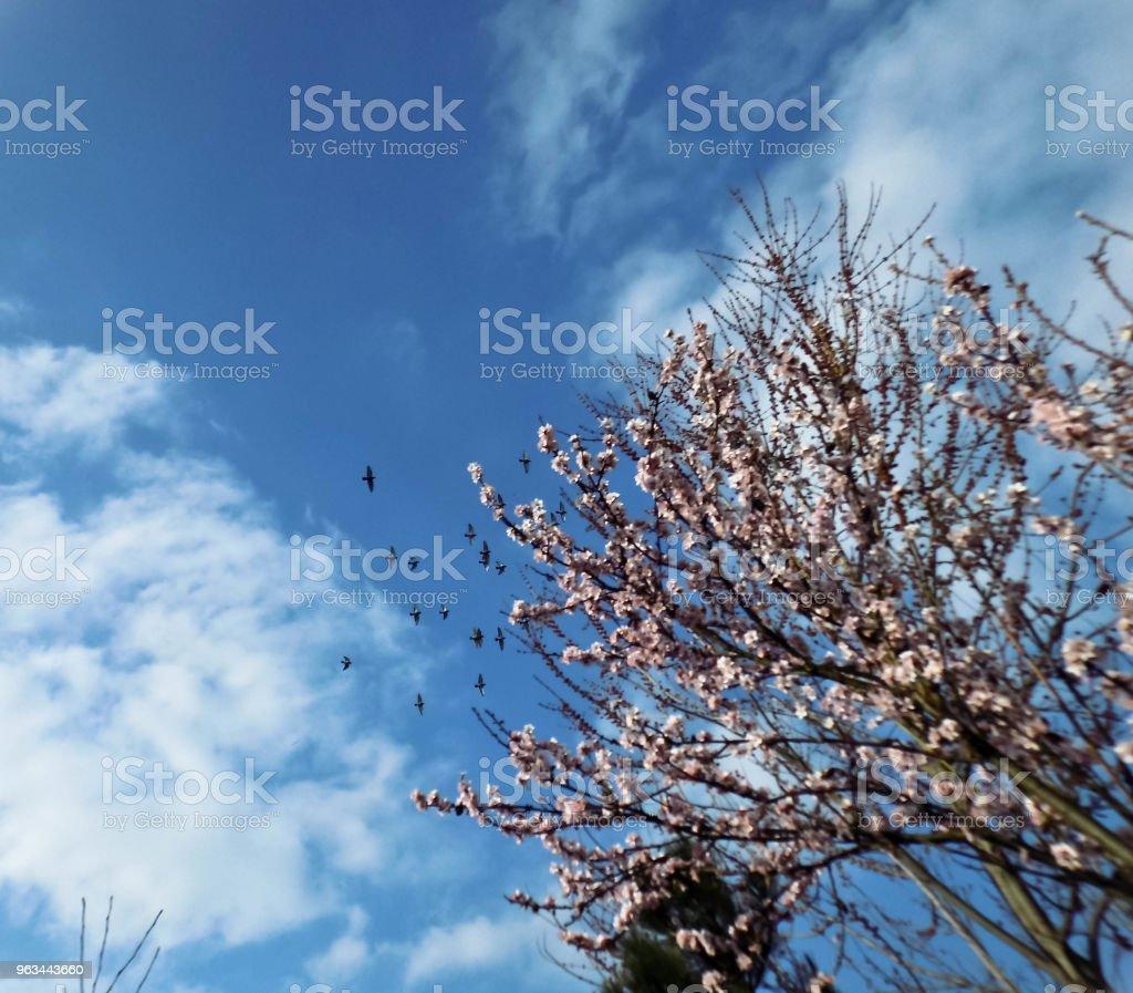 Kocham naturę - Zbiór zdjęć royalty-free (Beztroski)