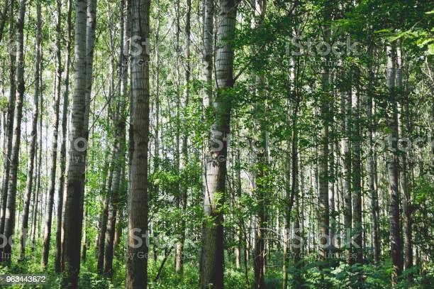 Kocham Naturę - zdjęcia stockowe i więcej obrazów Beztroski