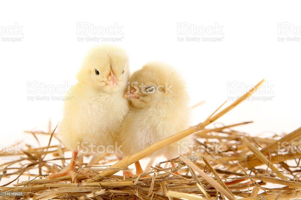 Love nest royalty-free stock photo