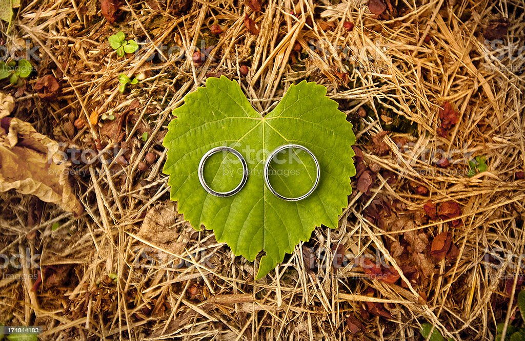 love on a leaf royalty-free stock photo