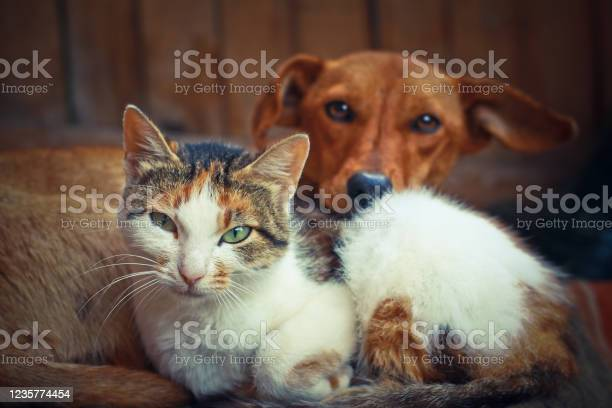 Love pets sleeping on a rug dog and cat lie together and are friends picture id1235774454?b=1&k=6&m=1235774454&s=612x612&h= jwohuu1pn5 pqcuruo61uidsor17e3rspsunn7ibey=