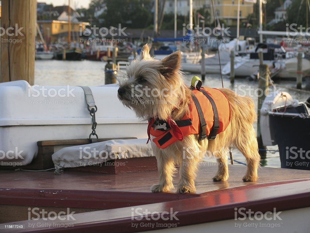 I love sailing! stock photo