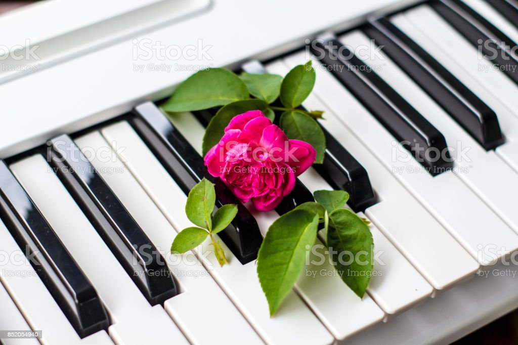 Love Songs Piano With Pink Flowers Stock Photo - Download