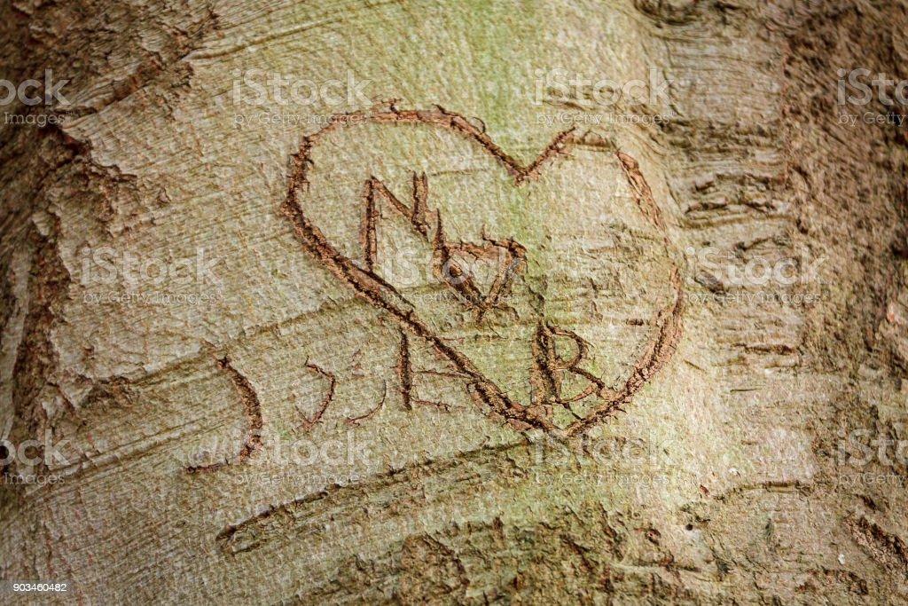 Liebe-Anweisung verkratzt in der Rinde eines alten Baumes, für immer mit dem Baum und dem grünen Moos wächst. – Foto