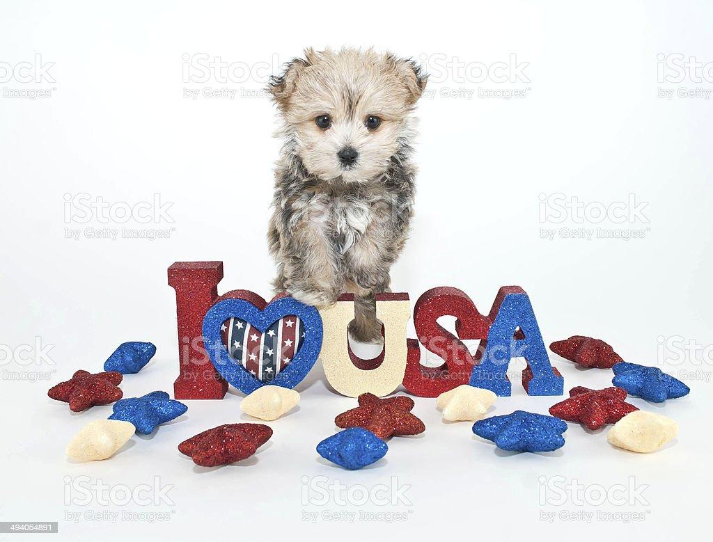I Love U.S.A. Puppy stock photo