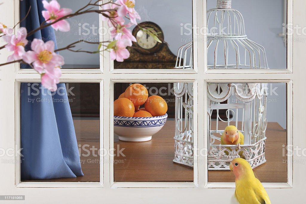 Lovebirds in Love stock photo