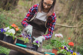 A woman is filling the pots with new flowers. There are a lot more flowers and some gardening equipment on the table.