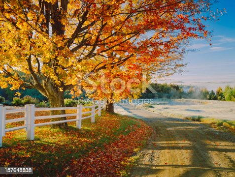 Country Dirt Road With Autumn Foliage Of A Large Sugar Maple In Vermont, USA