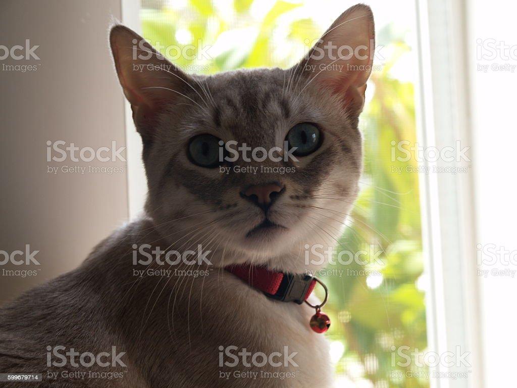 Lovely baby Cat stock photo