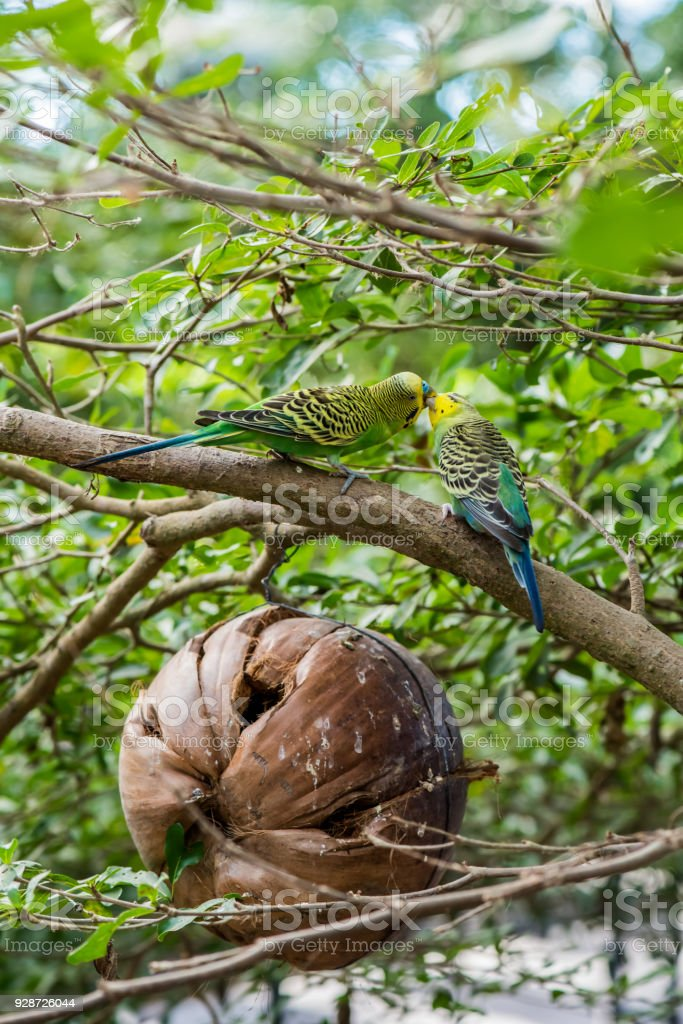 lovely bird, animal and pet in the garden stock photo