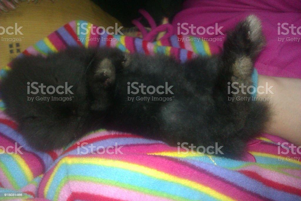 Lovely black bunny stock photo