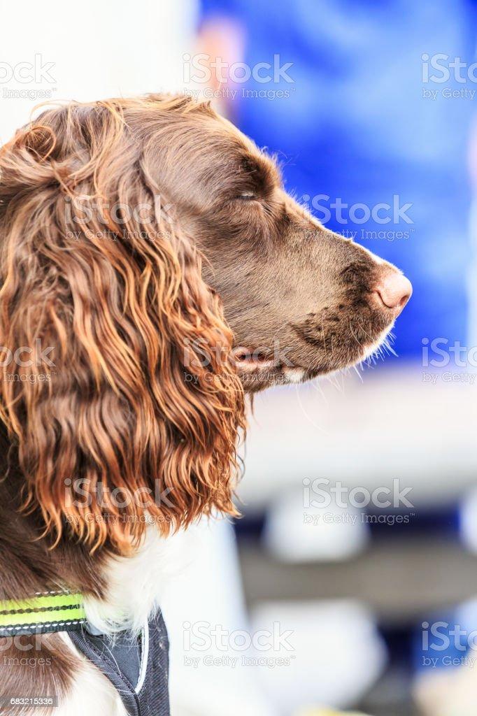 可愛的棕色小狗特寫 免版稅 stock photo