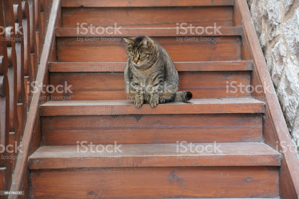 Lovely brown fat cat sitting on the wooden staircase and looking with curious eyes royalty-free stock photo