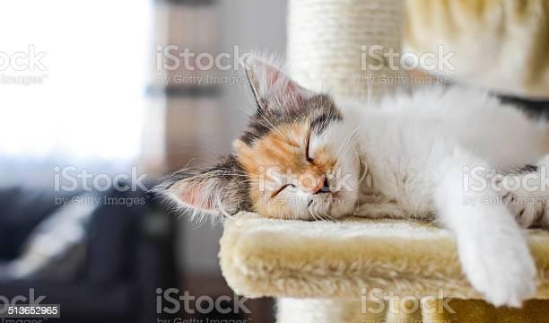 Lovely calico kitten sleeps on a scratching post picture id513652965?b=1&k=6&m=513652965&s=612x612&h=l36ta6f9czj7xpymxasxdygbnezxw51za4hzikl1v6i=