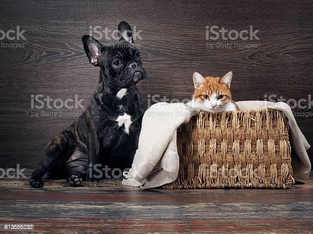 Lovely cat and dog picture id613555232?b=1&k=6&m=613555232&s=612x612&h=snhihqccs rgvnfohr2wjqxhhpdglk s2ei9kjkinju=