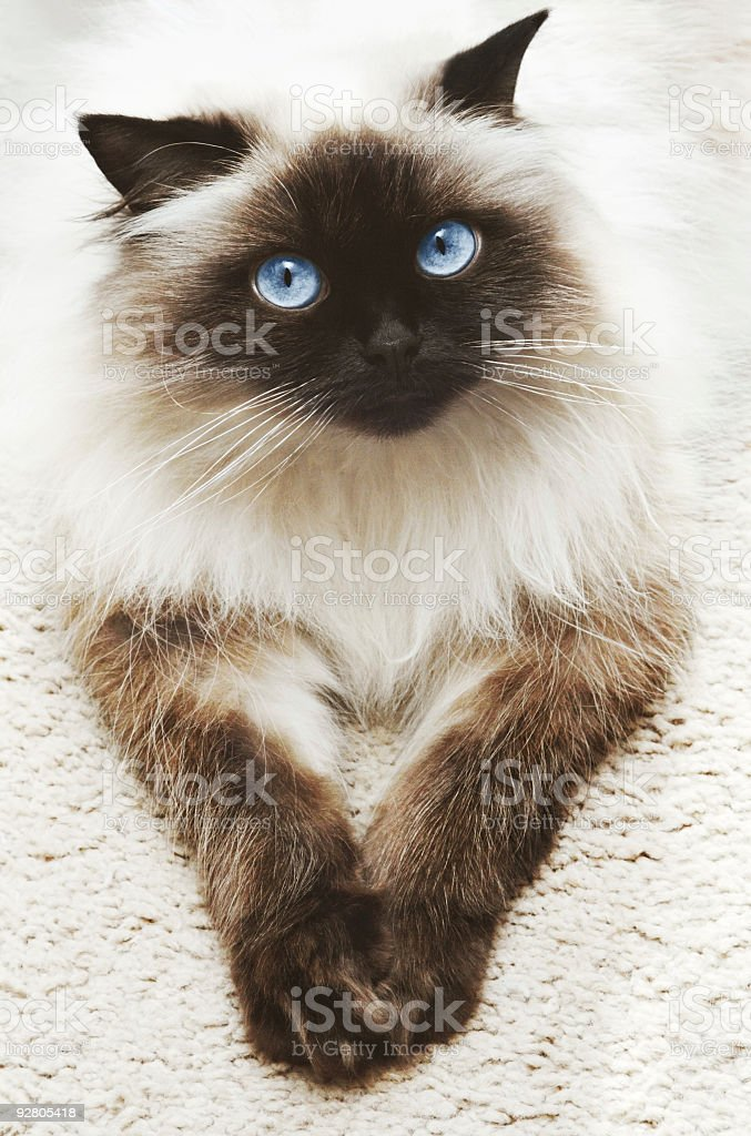 A lovely cat lying on a carpet stock photo