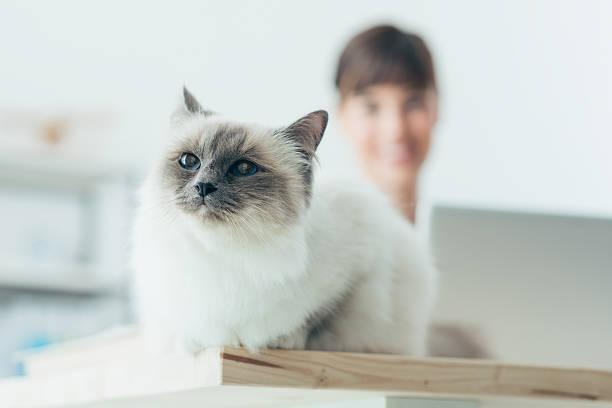 Lovely cat posing on a desk picture id612511858?b=1&k=6&m=612511858&s=612x612&w=0&h=pstwjcb5li 8rdwtq cxjxpx7mxdalrpyrftxx28u1w=