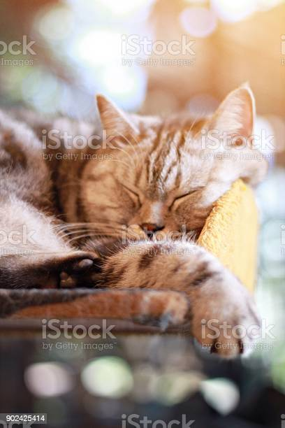Lovely cat sleeping in the room soft focus picture id902425414?b=1&k=6&m=902425414&s=612x612&h=0vnmwzlh3th2b03d v16ccmduruasnlrm9yvhw4svto=