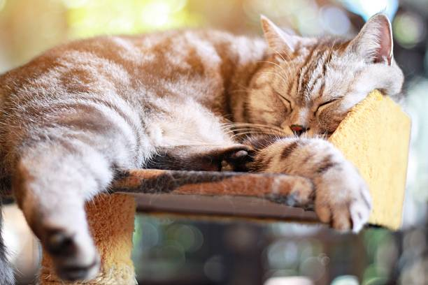Lovely cat sleeping in the room, soft focus stock photo