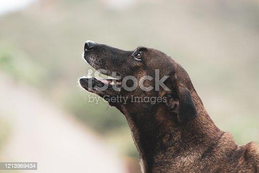 istock Lovely dog. 1213969434