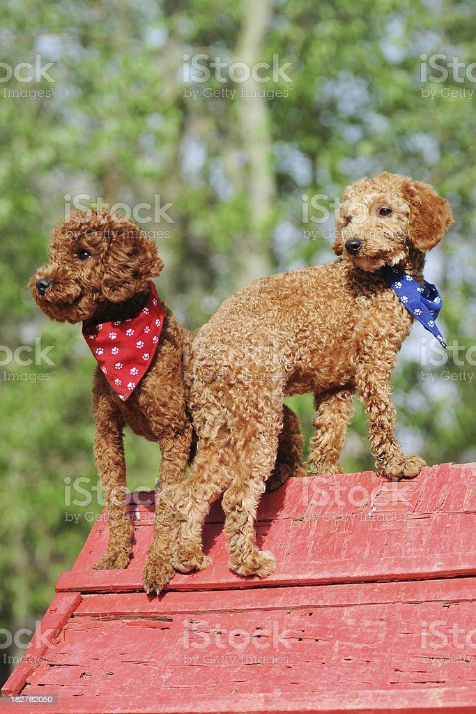 Lovely Doggy - XLarge royalty-free stock photo