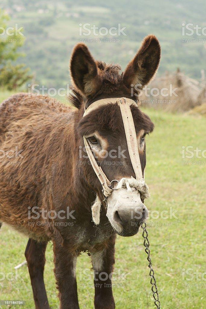 Lovely donkey. royalty-free stock photo