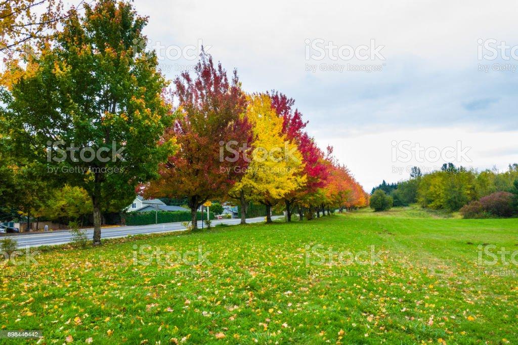 Lovely Fall Foilage in Troutdale, Oregon near Portland stock photo