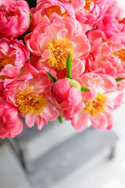 Royalty free flowerpot coral pictures images and stock photos istock lovely flowers in glass vase beautiful bouquet of peonies sort of coral charm floral mightylinksfo