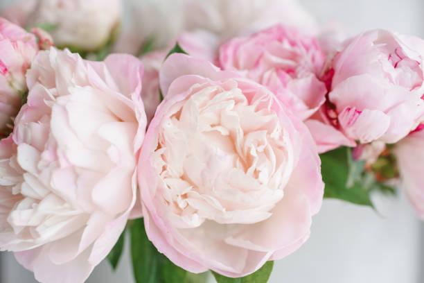 Lindas flores em vaso de vidro. Lindo buquê de peônias brancas e rosa. Composição floral, luz do dia. Papel de parede de verão. Cores pastel - foto de acervo