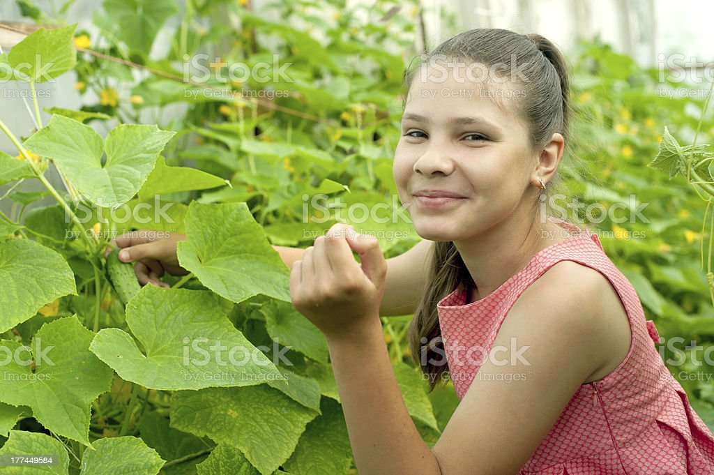 Lovely girl picking cucumber in the greenhouse royalty-free stock photo