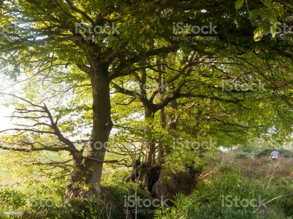 lovely growing green lush tree outside beautiful and peaceful with no people natural wonders royalty-free stock photo
