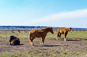 istock lovely horses grazing in the meadow, stable 1159066035