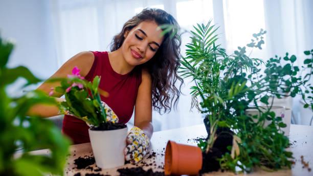mooie huisvrouw met bloem in de pot en tuinieren set - kamerplant stockfoto's en -beelden