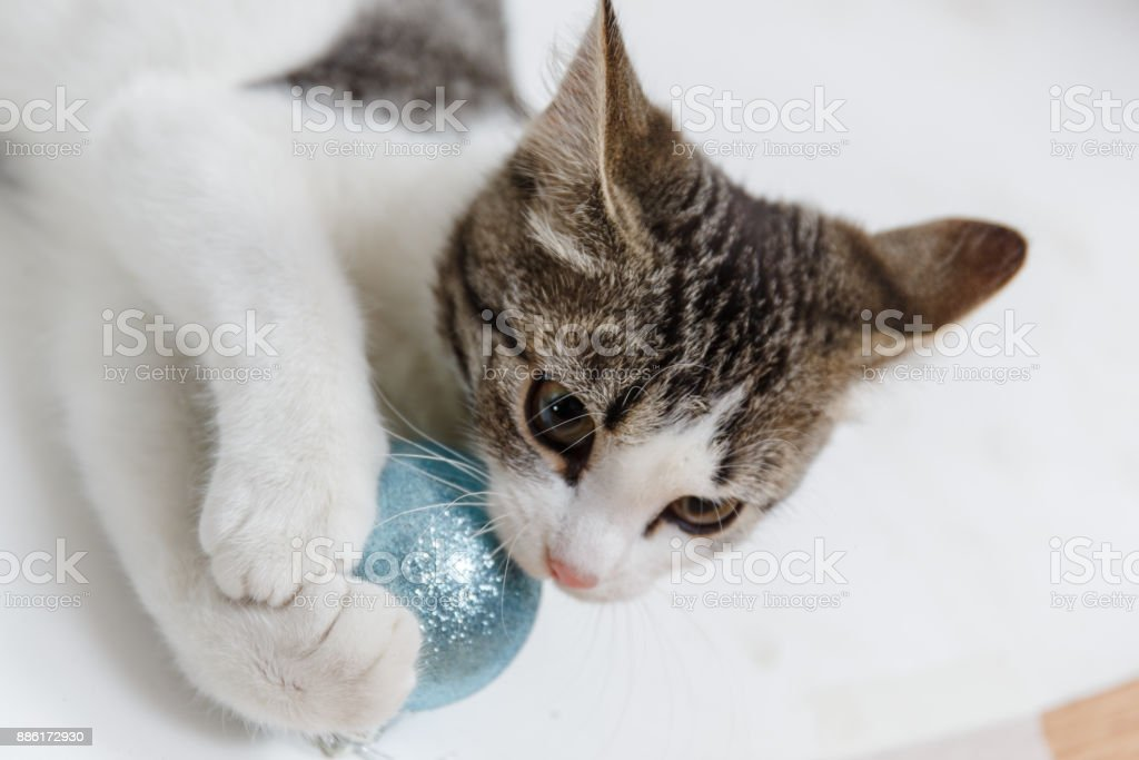 Lovely kitten with Christmas balls and a Christmas tree. New year kitten stock photo