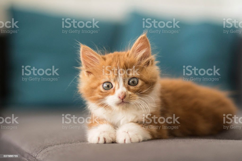 lovely little kitten lying down on a sofa stock photo