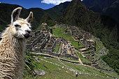 istock Lovely Llama and Macchu Picchu 157617041