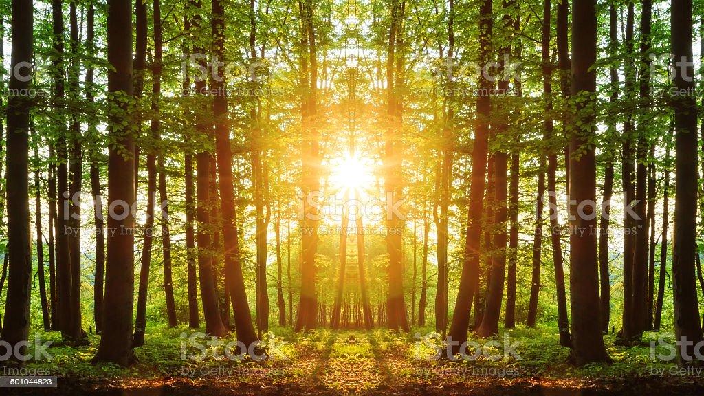 Lovely Mirror Sunset royalty-free stock photo