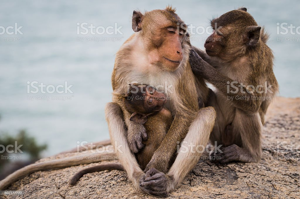 lovely monkey family stock photo