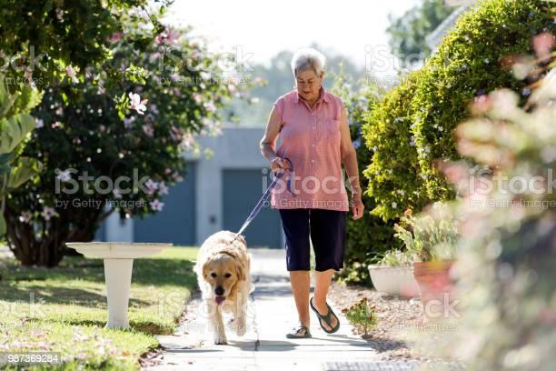 Lovely morning sunlight as senior woman walks her dog along a foot picture id987369284?b=1&k=6&m=987369284&s=612x612&h=j 2 t85zokxfs tsdlci7vm4vqapyumnt x0ed4blyc=