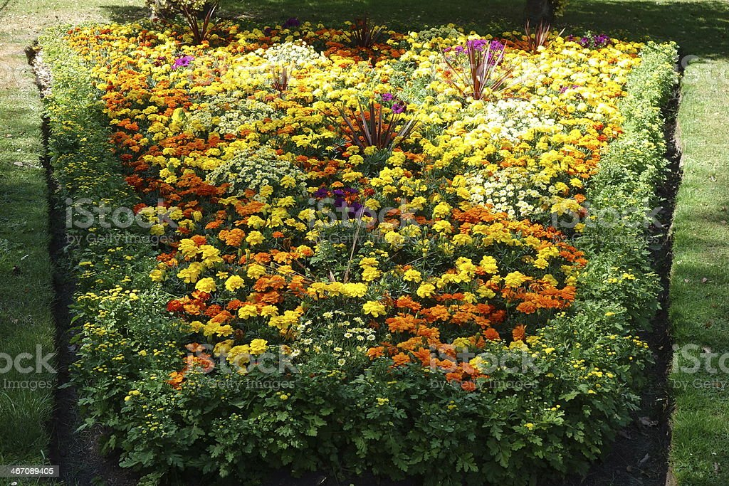 lovely orange and yellow marigold summer flower bed stock photo
