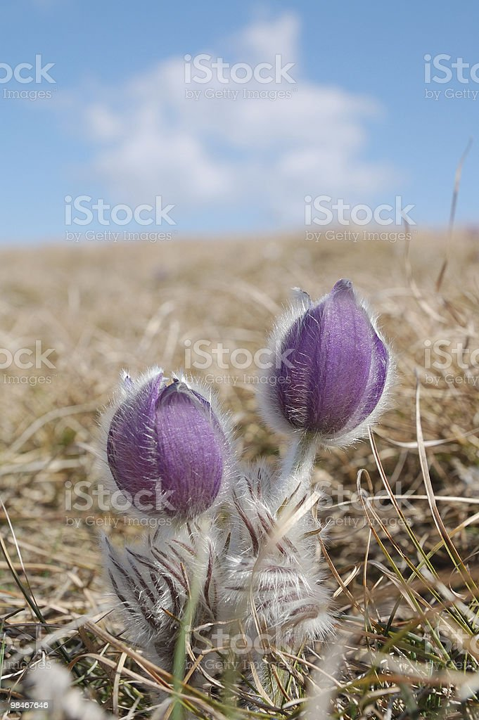 Lovely pair on the top royalty-free stock photo
